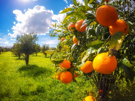scenery: Fantastic views of the garden with blue sky. Mediterranean climate. Sicily island, Italy, Europe. Beauty world. Taken with GoPro 4.