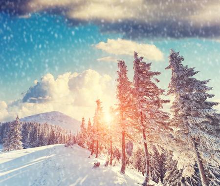 majestic mountain: Majestic mountain landscape glowing by sunlight and blue sky. Dramatic wintry scene in Carpathian, Ukraine