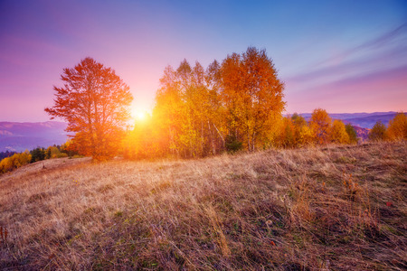 majestic mountain: Majestic birch tree on a hill slope with sunny beams at mountain valley. Dramatic colorful morning scene. Red and yellow autumn leaves in Carpathians, Ukraine Stock Photo