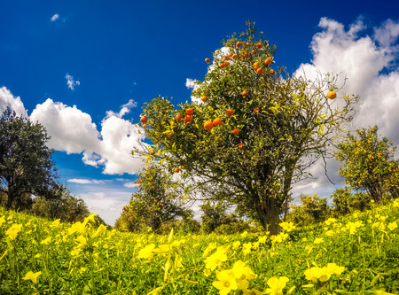 flowers sun: Fantastic views of the garden with blue sky. Mediterranean climate in Sicily island, Italy