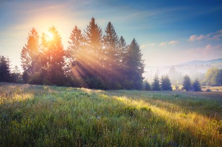 wonderful: Beautiful green hills glowing by warm sunlight at twilight in Carpathian, Ukraine Stock Photo