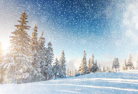 táj: Fantasztikus hegyi táj ragyogó napfény. Drámai téli jelenet Kárpátok, Ukrajna