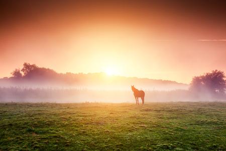 Arabian horses grazing on pasture at sundown in orange sunny beams. Dramatic foggy scene in Carpathians, Ukraine Stockfoto