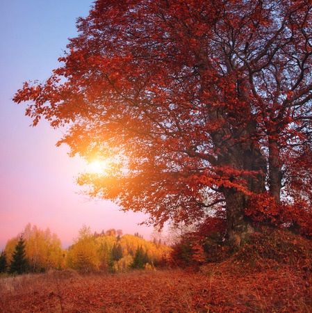 majestic mountain: Majestic birch tree on a hill slope with sunny beams at mountain valley.