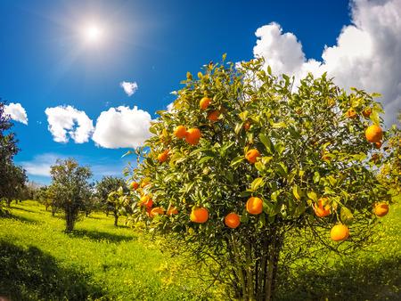 青い空と庭の素晴らしい景色。シチリア島、イタリアの地中海性気候 写真素材