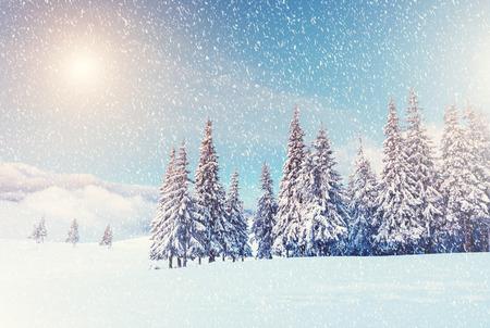素晴らしい山の風景は、太陽の光で輝きます。カルパチア、ウクライナの劇的な冬景色 写真素材