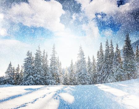 wonderful: Fantastic mountain landscape glowing by sunlight. Dramatic wintry scene in Carpathian, Ukraine Stock Photo