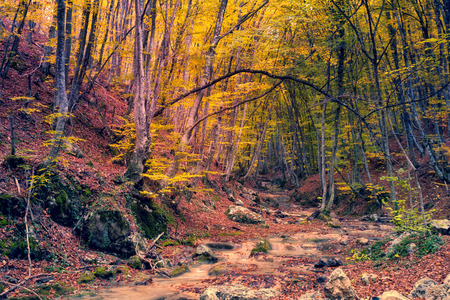 creek: Majestic colorful forest with sunny beams. Dramatic scene. Red autumn leaves in Crimea, Ukraine Stock Photo