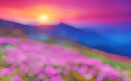 effect sunset: Great view of the magic pink rhododendron flowers. Natural blurred background.