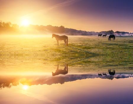 Arabian horses grazing on pasture. Carpathians, Ukraine, Europe. Beauty world. Retro and vintage style, soft filter. Instagram toning effect. Flip canvas vertical. Double exposure effect.