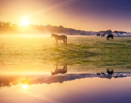 Arabian horses grazing on pasture. Carpathians, Ukraine, Europe. Beauty world. Retro and vintage style, soft filter. Instagram toning effect. Flip canvas vertical. Double exposure effect.