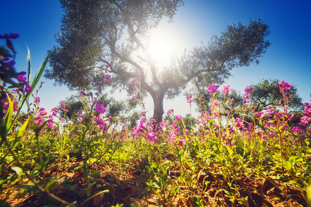 wonderful: Fantastic views of the garden with blue sky. Mediterranean climate. Gorgeous and picturesque scene. Sicily island, Italy