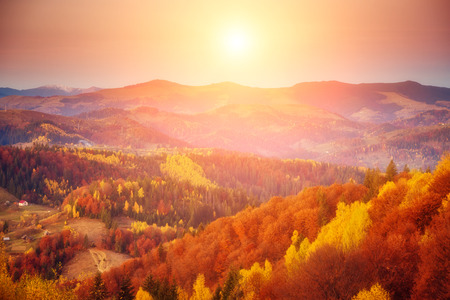 majestic mountain: Majestic tree with sunny beams at mountain valley. Dramatic morning scene. Red and yellow leaves. Retro filter and vintage style. Carpathians, Ukraine Stock Photo