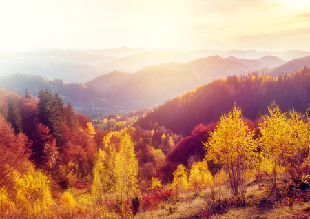 Majestic trees with sunny beams at mountain valley. Dramatic and picturesque morning scene. Red and yellow leaves. Warm toning effect. Carpathians, Sokilsky ridge. Ukraine