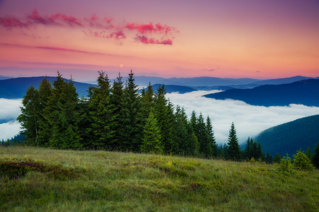 bonne aventure: Fantastic foggy mountains glowing by sunlight. Dramatic and picturesque morning scene. Carpathian, Ukraine Banque d'images
