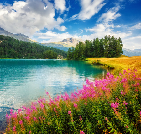 spring water: Fantastic view of the azure pond Champfer. Picturesque scene. resort Silvaplana village, district of Maloja in the Swiss canton of Graubunden, Alps. Stock Photo