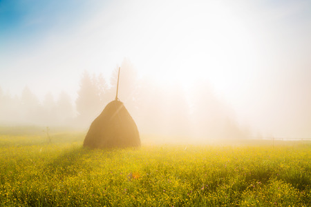 Fantastic day with fresh blooming hills in warm sunlight. Dramatic and picturesque morning scene. Carpathian, Ukraine