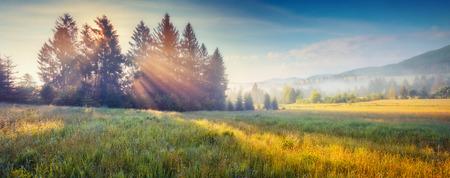 Une journée fantastique avec des collines en fleurs au soleil chaud au crépuscule. Scène matinale dramatique et pittoresque. Carpates, Ukraine