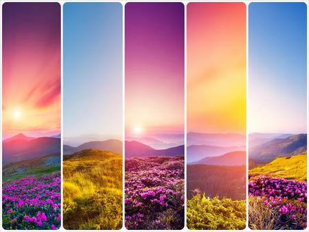 Creative collage of summer landscape with vertical photo. Carpathian, Ukraine