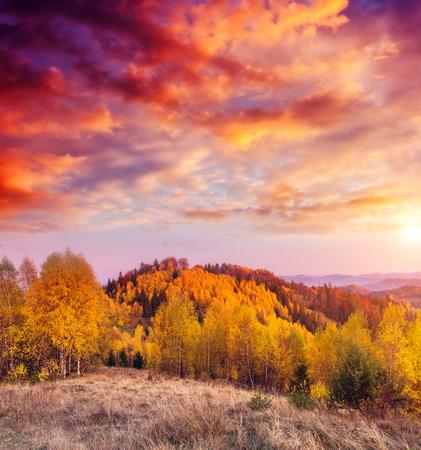太陽の光の色の木を照らします。劇的な美しい朝のシーン。赤や黄色の葉。暖かい調子を整える効果。場所は、Sokilsky リッジ カルパチアンを配置します。ウクライナ、ヨーロッパ。美の世界。 写真素材 - 72944740