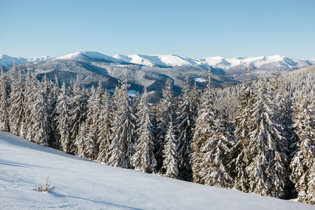 Majestic landscape glowing by sunlight in the morning. Dramatic wintry scene. Place location Carpathian national park, Ukraine, Europe. Alps ski resort. Beauty world. Happy New Year!