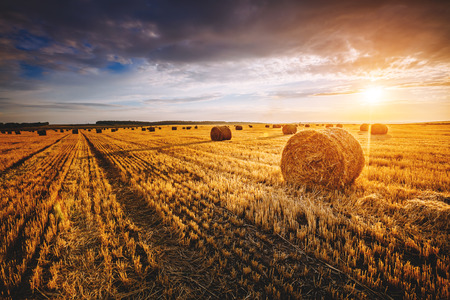 Majestic yellow field with round hay bales at twilight glowing by sunlight. Dramatic and picturesque morning scene. Location place Ukraine, Europe. Beauty world. Instagram toning effect. Stock Photo