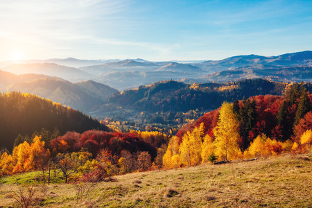majestic mountain: Majestic trees with sunny beams at mountain valley. Dramatic and picturesque morning scene. Red and yellow leaves. Location place Carpathians, Sokilsky ridge. Ukraine, Europe. Beauty world.
