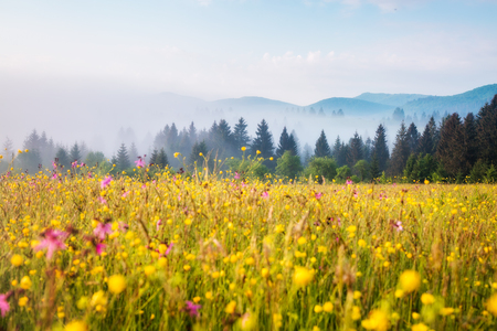 Fantastic green hills glowing by warm sunlight at twilight. Dramatic and picturesque morning scene. Location place: Carpathian, Ukraine, Europe. Artistic picture. Beauty world. Soft filter effect. Stock Photo