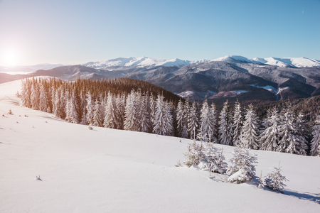 Majestic landscape glowing by sunlight in the morning. Dramatic wintry scene. Place location Carpathian national park, Ukraine, Europe. Alps ski resort. Beauty world. Happy New Year! Stock Photo - 81501767