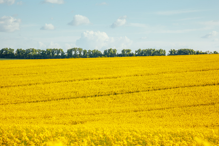 Magnificent views of the endless canola field on a sunny day. Picturesque and gorgeous scene. Location place Ukraine, Europe. Artistic picture. Beauty world. Stock Photo