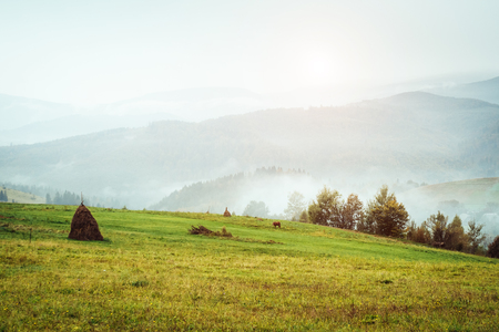 View of the green hills which glowing by sunlight. Dramatic scene and picturesque picture. Location place Carpathian, Ukraine, Europe. Beauty world. Retro and vintage style. Instagram toning effect. Stock Photo - 81501905