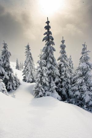 늦었다 고 산에서 눈이 덮여 나무