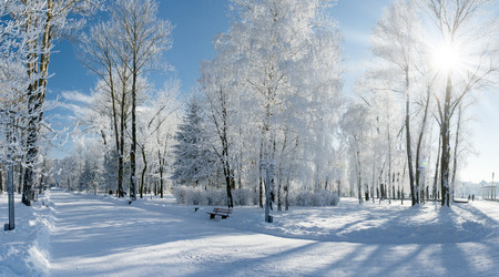 Beautiful winter landscape with snow covered trees Stock Photo