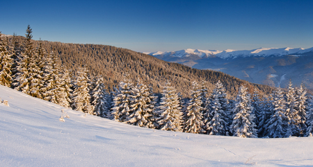 Trees covered with hoarfrost and snow in mountains. Stock fotó