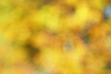 Beautiful abstract nature bokeh. Blurred background. Stock fotó