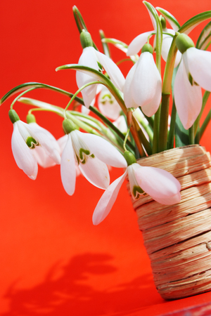 Beautiful bouquet snowdrops in a vase Stok Fotoğraf