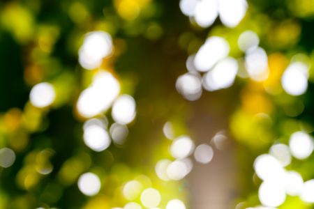 Beautiful abstract nature bokeh. Yellow blurred background