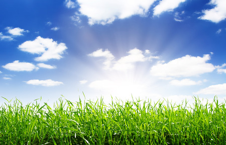 spring green field and beautiful blue sky Banco de Imagens