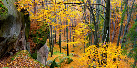 Colorful autumn leaves on a trees in forest