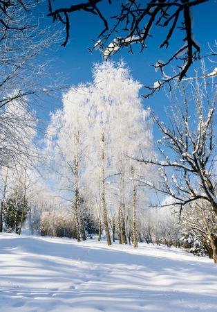 Un día helado y soleado está en el parque