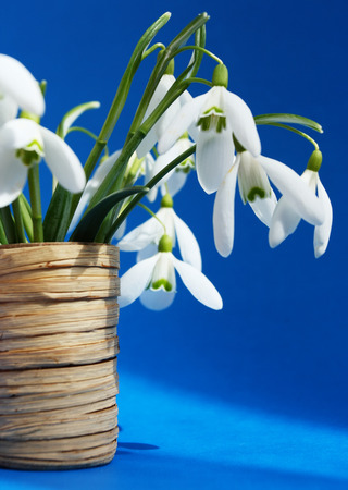 Beautiful bouquet snowdrops in a vase Stok Fotoğraf