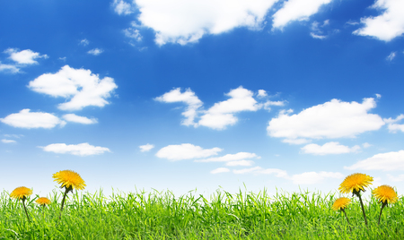 dandelion in green grass under blue sky with clouds Stock Photo