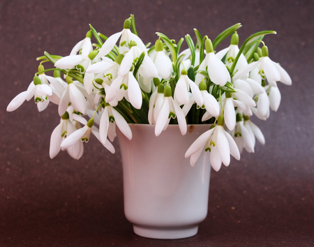 Beautiful bouquet snowdrops in a vase Stock Photo