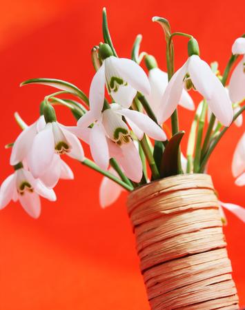 Beautiful bouquet snowdrops in a vase Stock fotó