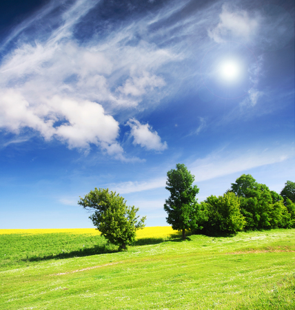 Trees on green meadow and the blue sky Stock Photo - 81783272