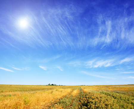 summer meadow and the beautiful blue sky Stock Photo - 81783260