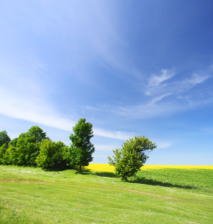 nebulosity: Trees on green meadow and the blue sky