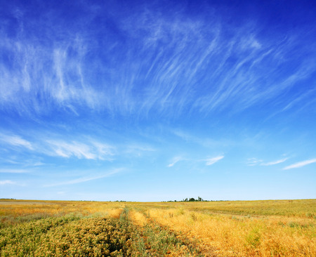summer meadow and the beautiful blue sky Stock Photo - 81763995