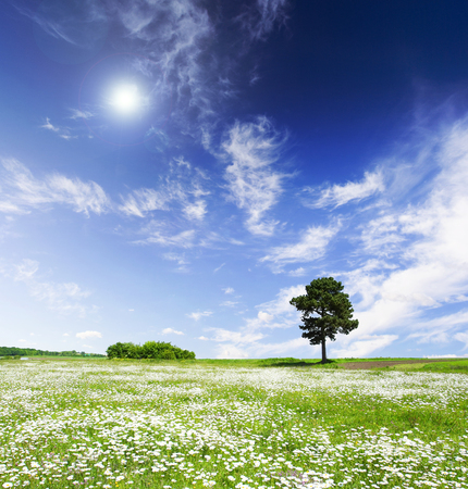 Tree on green meadow and the blue sky Stock Photo - 81932326