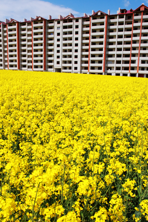 Residential building under construction with beautiful yellow field Imagens - 81762675